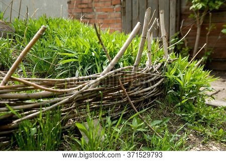 Old Wicker From The Branches Hedge For Flower Beds With Green Grass