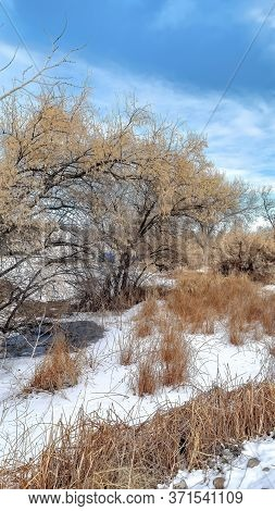 Vertical Frame Brown Grasses And Trees With Leafless Branches On Snow Covered Land In Winter