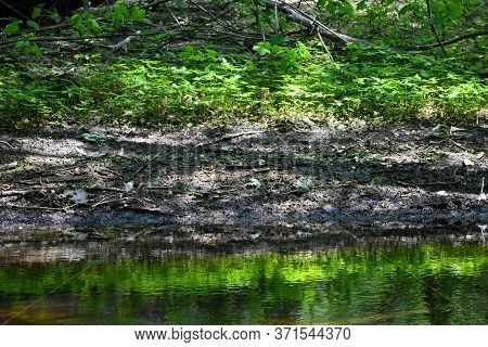 Reflection In Water Of Green Plants And Sandy Shoreline.