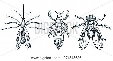 Bloodsucking Insect Parasites Icons. Vector Hand Drawn Sketch Illustration. Mosquito, Louse, Flea An