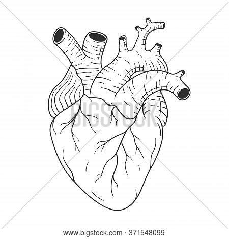 Human Heart Anatomically Correct Hand Drawn Line Art. Anatomy Of The Internal Organ. Black Flash Tat