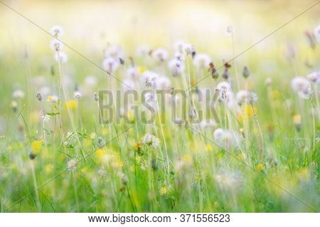 Beautiful Colorful Meadow On Sunny Day In Summer. Close Up. For Background.