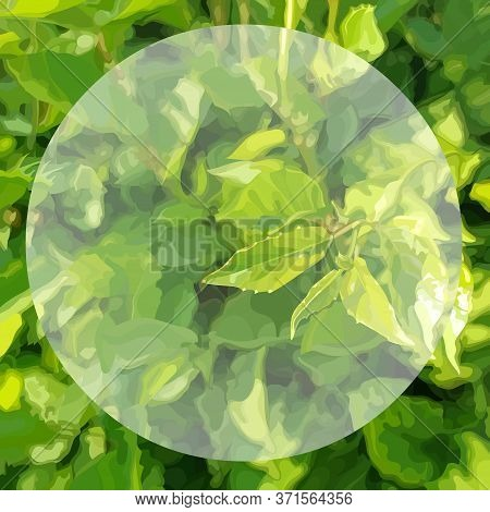 Square Green Summer Background Of Dense Vegetation With Circle In The Middle. Vector Image