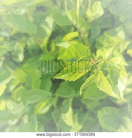 Square Light Green Summer Background With Dense Vegetation And Young Leaves. Vector Image