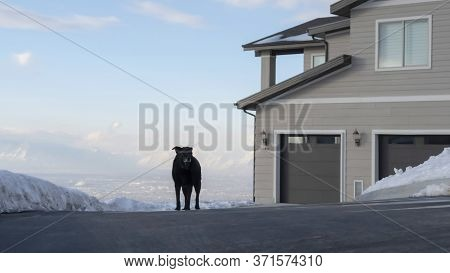 Panorama Dog On The Driveway In Front Of A Home At A Neighborhood In Wasatch Mountains