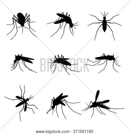 Mosquito Silhouettes. Swarm Flying Insects, Dangerous Bite Proboscis Mosquitoes Virus Infection Mala