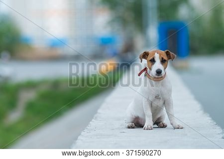 A Frightened Frightened Puppy Sits Alone On A Parapet. A Sad Little Dog Got Lost On A Street In The