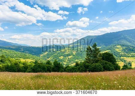 Grassy Mountain Meadow In Summer. Idyllic Landscape On A Sunny Day. Scenery Rolling In To The Distan