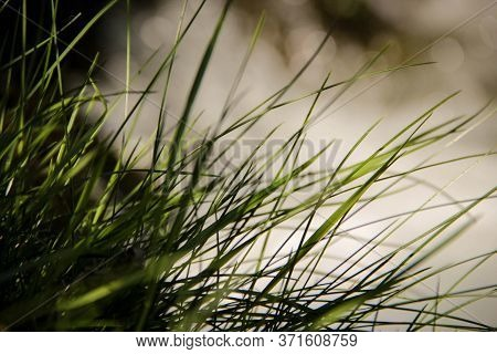 Blades Of Grass In Front Of A Creek