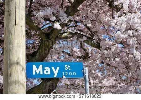 Blue And White Street Sign Surrounded By Pink Blossoms Of Cherry Tree, Victoria,  British Columbia