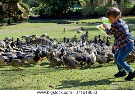 Beacon Hill Park, Victoria, British Columbia, April 9, 2020: Young Boy In Plaid Shirt Feeds The Duck