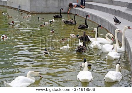 Nice, France - June 15, 2014: Parc Phoenix, Botanical And Zoo Garden In Nice, France.