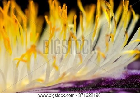 Abstract Background, Iris Flower Stamens, From The Iridaceae Family, Macro, Supermacro, Similar To A