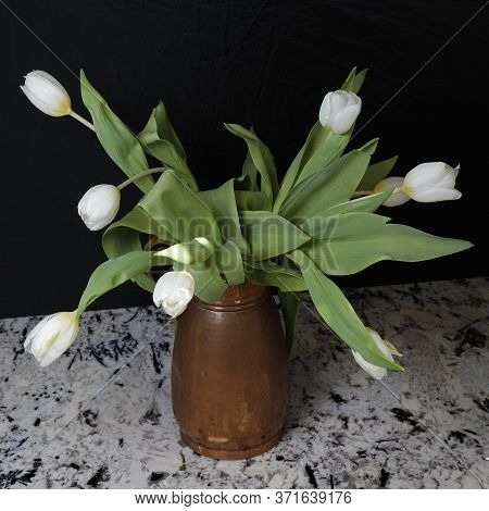 A Copper Pitcher On A Stone Counter Are White Tulip Flowers With Green Leaves In Front Of A Black Ba