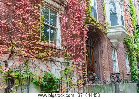 Victorian Homes From Street In Boston Red Brick Exterior With Boston Ivy In Autumn Colors Draped Dow