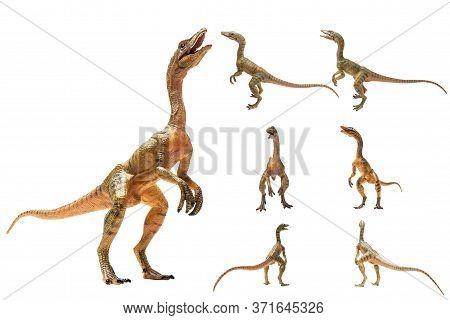 Compsognathus  Dinosaur On White Background  . Compsognathus  Dinosaur On White Background  .