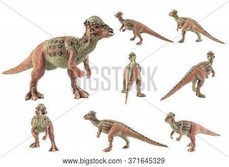 Pachycephalosaurus, Dinosaur On White Background .  Pachycephalosaurus, Dinosaur On White Background