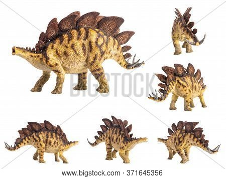 Stegosaurus Dinosaur On White Background . Stegosaurus Dinosaur On White Background .