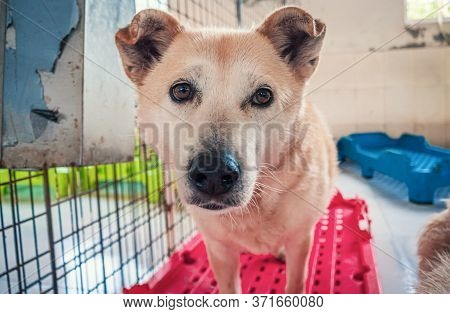Sad Dog In Shelter Waiting To Be Rescued And Adopted To New Home. Shelter For Animals Concept