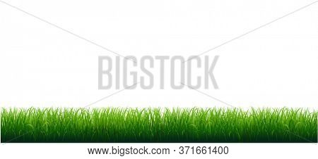 Grass Frame With White Background