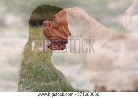 Multiple Exposure Image Dogue De Bordeaux Or French Mastiff With Young Woman At Outdoor Park