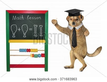 The Beige Dog Teacher In A Square Academic Hat And A Black Tie Is Standing Near The Blackboard. Math
