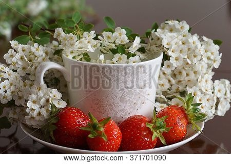 Ripe Strawberries And Fragrant White Cherry Blossoms. Summer Composition.