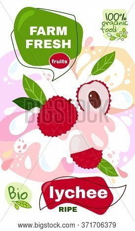 Food Label Template. Vector Illustration For Organic Lychee Milkshake Fruit Drink. Natural Bio Fruit