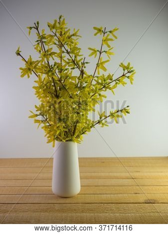 White Ceramic Vase Full Of Fresh Cut Forsythia Branches In The Spring Sitting On A Real Wood Surface