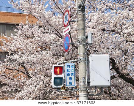 Pedestrian Traffic Light In Japan