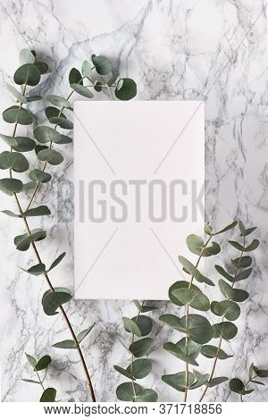 Beautiful Abstract Floral Background. Flat Lay, Top View Eucalyptus On Marble Background, Flat Lay O