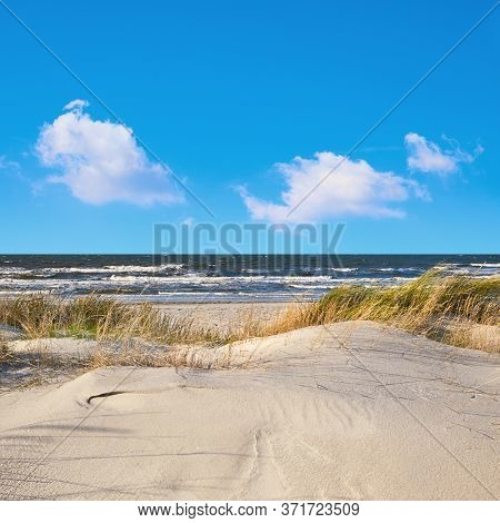 Sand Dunes With Grass And Shrubs Protecting Beach From The Storms In Hiddensee Island In Germany. Pa