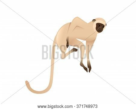 Cute Vervet Monkey Beige Monkey With Brown Face Cartoon Animal Design Flat Vector Illustration Isola