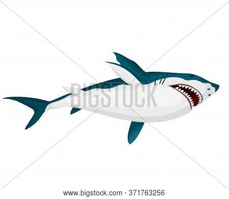 Shark. Big Dangerous Marine Predator. Toothy Swimming Angry Shark. Underwater Character Of Sea Anima