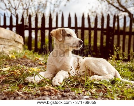 Beautiful Puppy Posing On Camera In The Courtyard
