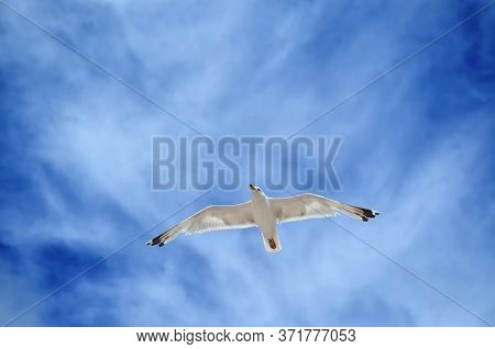 A Large Seagull Flies Against A Blue Sky. Sea Birds Close Up.