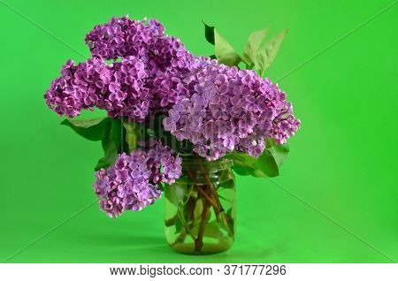 Branches Of A Young Blooming Lilac Closeup