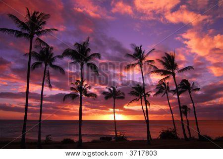 Hawaiian Sonset On Molokai