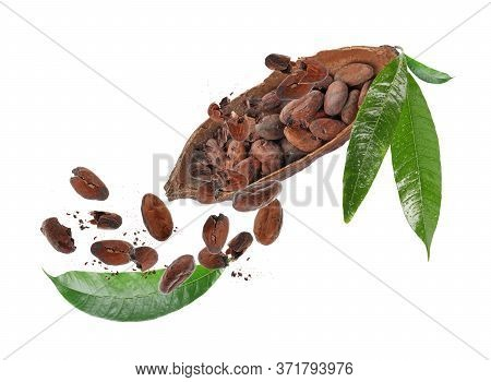 Cocoa Pod And Beans Falling On White Background