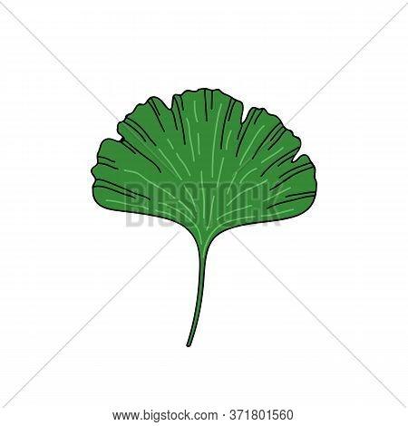 Gingko Leaf Doodle Icon, Vector Color Illustration