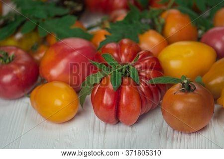 Tomatoes On White Wooden Background. Fresh Ripe Garden Tomatoes