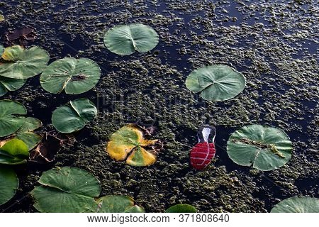 Abandoned Shoe Floating With Lilly Pads In The Water
