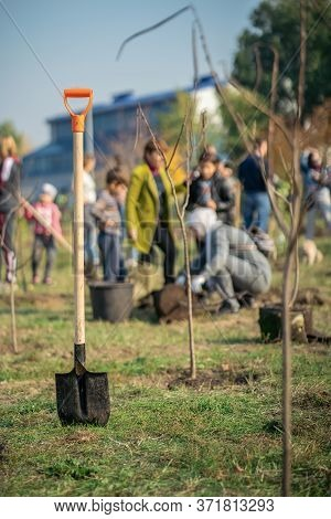 Planting New Trees With Gardening Tools In Green Park
