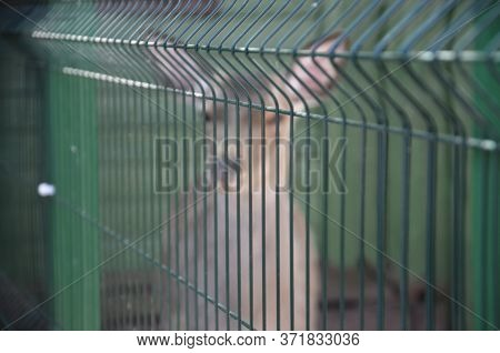 No Focus, No Sharpness .young Deer Behind A Green Fence, Aviary. Wild Animal In Captivity. Metal Fen
