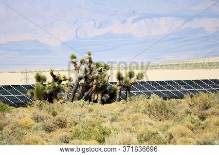 Joshua Trees And Sagebrush Besides Modern Solar Panels At A Solar Farm Creating Alternative Energy T