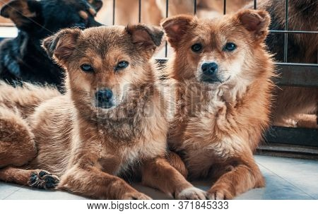 Unwanted And Homeless Dogs Of Different Breeds In Animal Shelter. Looking And Waiting For People To