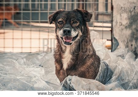 Portrait Of Sad Dog In Shelter Waiting To Be Rescued And Adopted To New Home. Shelter For Animals Co