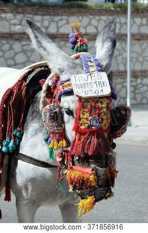 Burro Taxi (donkey Rides), Mijas, Costa Del Sol, Malaga Province, Andalucia, Spain, Western Europe.