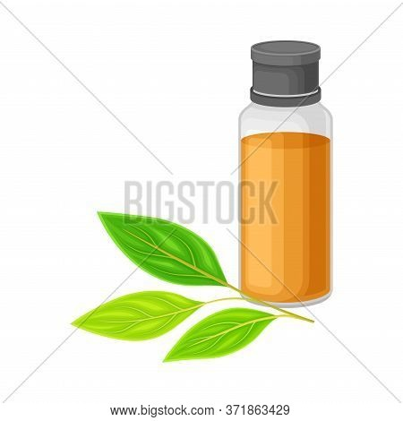 Glass Bottle With Essential Oil Of Sandalwood And Leafy Tree Branch Rested Nearby Vector Illustratio