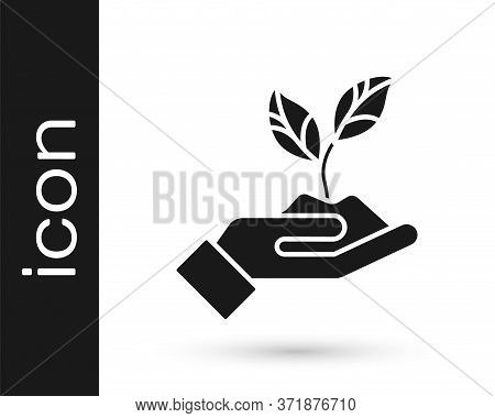 Grey Plant In Hand Of Environmental Protection Icon Isolated On White Background. Seed And Seedling.